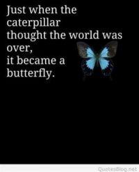 Just when the caterpillar