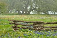 Log Fence and  Live Oaks 2