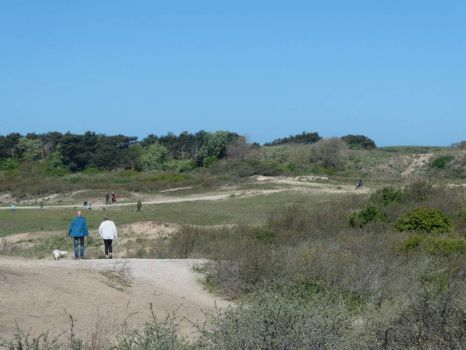 Part of the dunes of Noordwijk. This whole area is 'off leash' for dogs!!