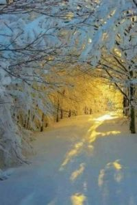 THE BEAUTY OF SNOW