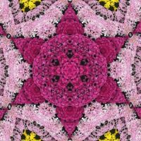 kaleidoscope 183 chrysantheme star very large