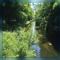 River Skerne 4
