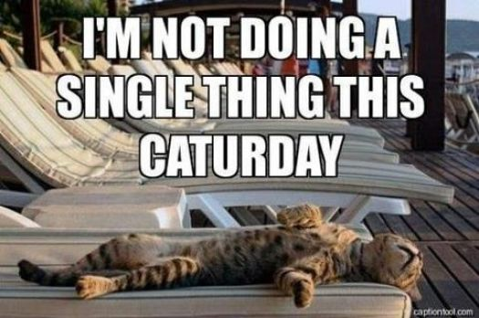 Not doing anything on Caturday