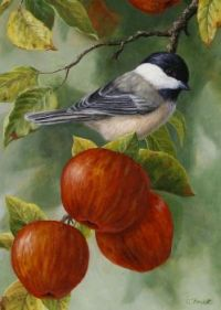 Apple Chicadee by Crista Forest