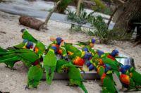 Brevard zoo 3
