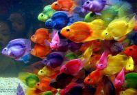 Goldfish?