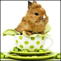 A Baby Easter Bunny in a Polka-Dot Cup