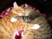Toby & TomKat sleeping