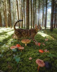 cat among mushrooms