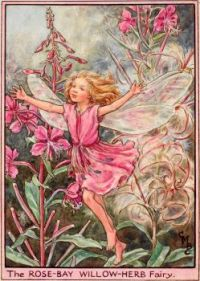The Rose-Bay Willow-Herb Fairy