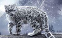 Endangered Wild Cats: Snow Leopard