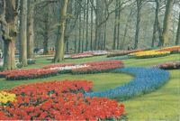 Postcard & envelope pictures 149 - Kuekenhof Lisse (Holland)