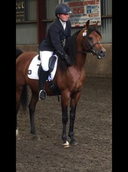 Arab stallion just finished his dressage test
