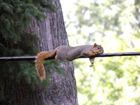 Write a Caption!  squirrel on a wire