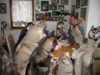 The experts say we shouldn't feed humans at the table, but they are so cute