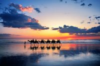 Camel Riders At Cable Beach In Western Australia