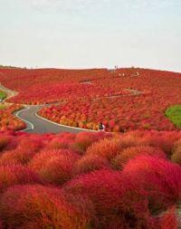 Seaside Park Japan