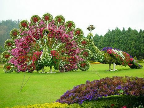 Beautiful Floral Garden..