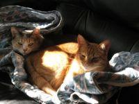 Ginger and Mango 2014