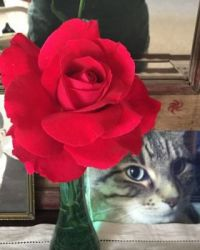 Gonzo and Red Rose by Helen