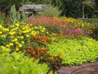 Brookside Gardens 2