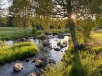 Sunset over the stream