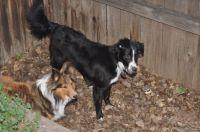 Nellie & Daisy