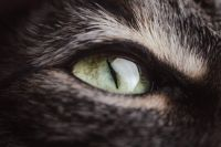 cat-5887426_1920