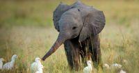 Baby Elephant! <3