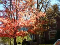 Fall Colors at EKU 3