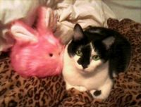 Joey w/ his tribble-bunny!