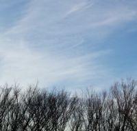 Tree Tops and Sky