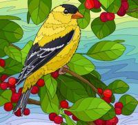 Goldfinch - 156