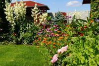 Ze zahrady