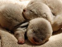 Show some love for baby otters