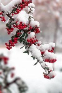 Besjes onder een laagje sneeuw.