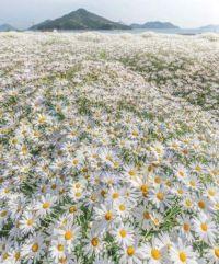 Flower Park Urashima, Kagawa prefecture, Japan.