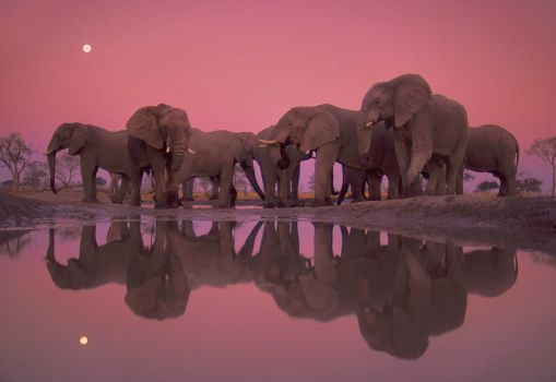 twilight-of-the-giant-elephants