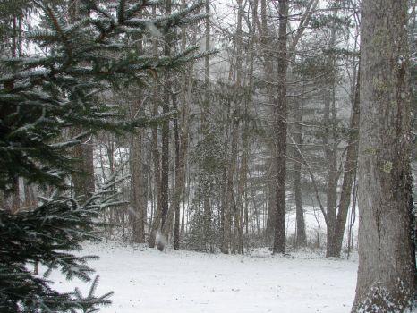 snowy day in North Carolina