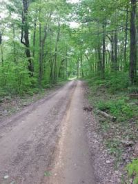 Road going pass cabin in Hocking Hills