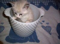 a pot full of kitten
