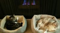 Kitties by the fire