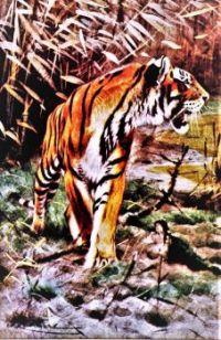 The world of animal life (1910)