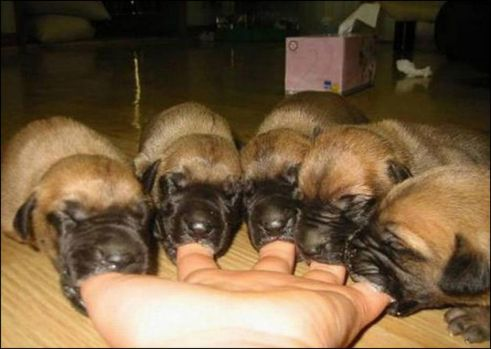 Things that make you say Ahhh...Finger Pup-pets!