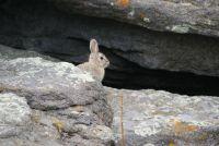 Rabbit at Lost Lake