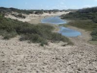 Dunes near Noordwijk; dune-lakes due to lots of rain in April and May...