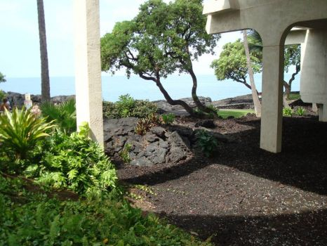 Lava, plants, trees, ocean & a great place to rest in Kona, Hi