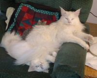 The Iceman & his little sister Alaska, for VermontMeow.