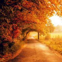 Autumn Peace 2