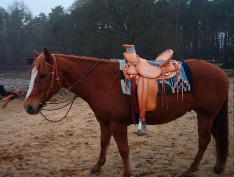 New handmade saddle from Vaquero.nl for Howy
